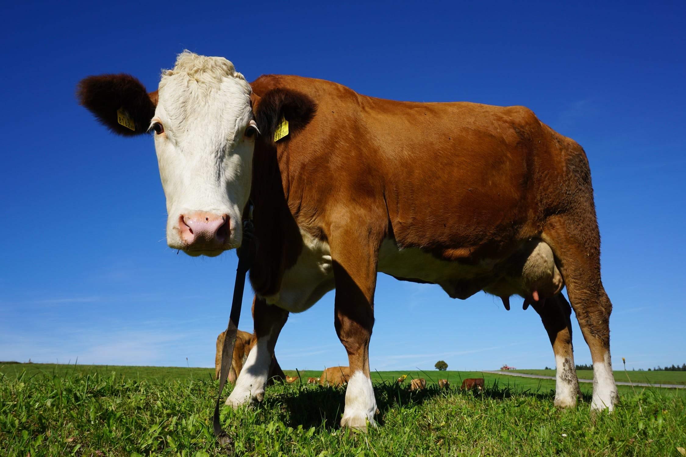 China lifts 20-year ban on exports of British beef – creating £250m market