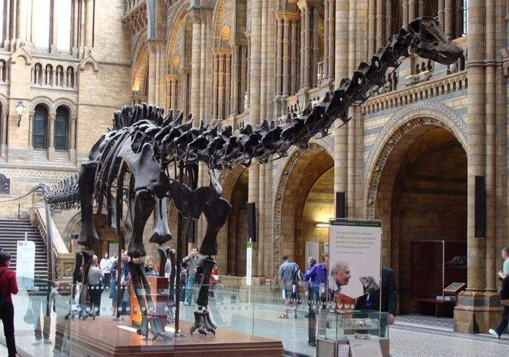 Dippy Diplodicus Natural History Museum
