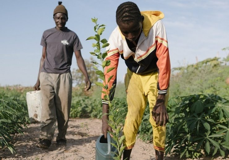 Ecosia funding helped to plant trees in Senegal (Credit: Ecosia)