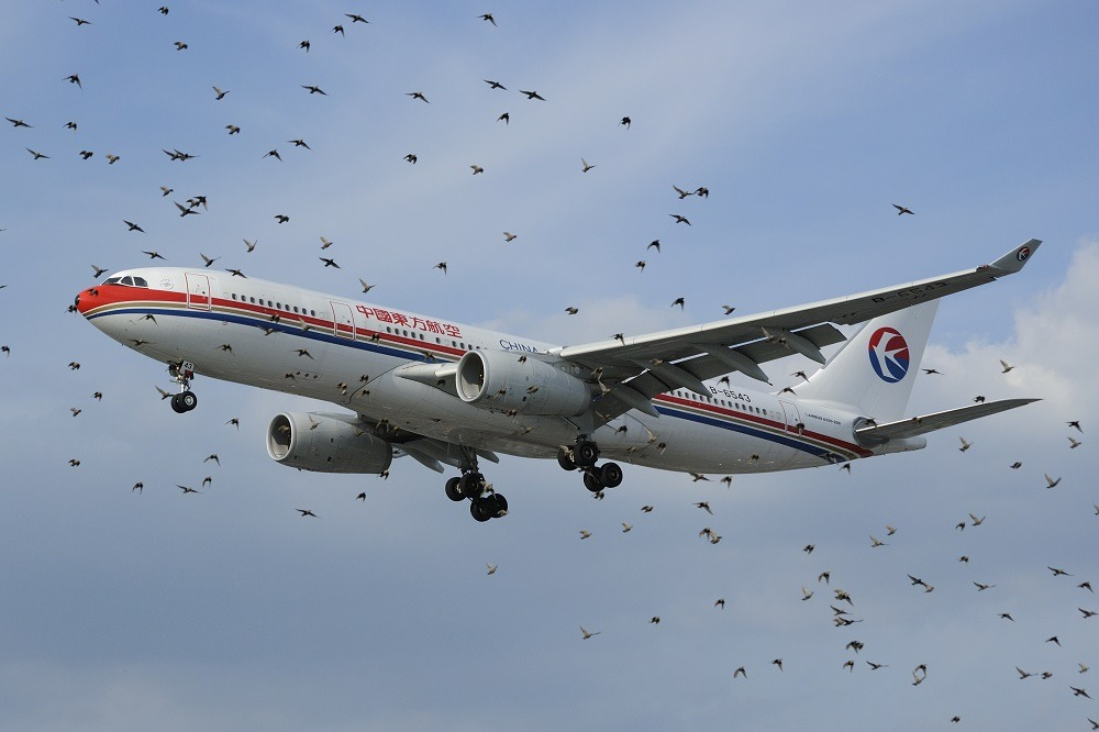 Airplane bird strike, diana gomes da silva