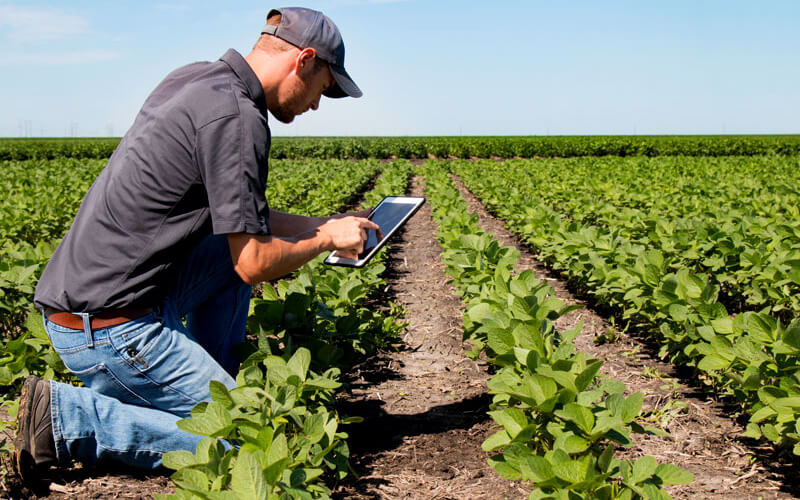 Technology in the wine industry