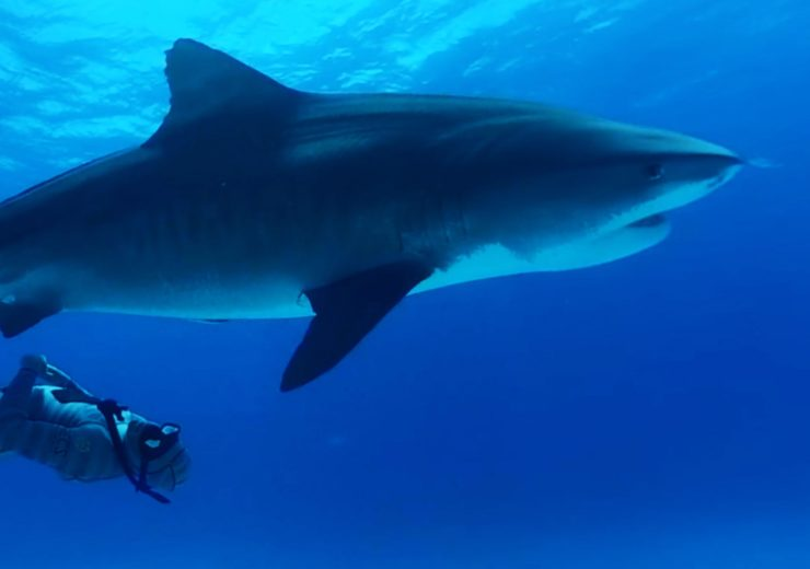 Immotion are the first company to tag a hammerhead and tiger shark with VR tech