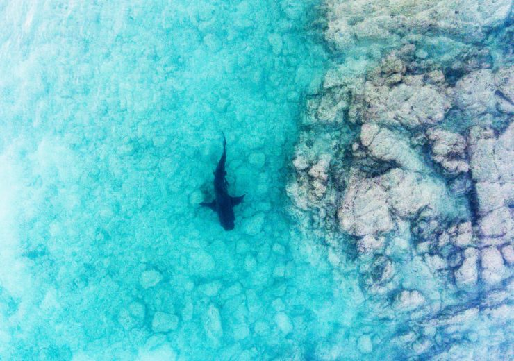 More than 30 sharks have been spotted by Drone Shark's service (Credit: Drone Shark)