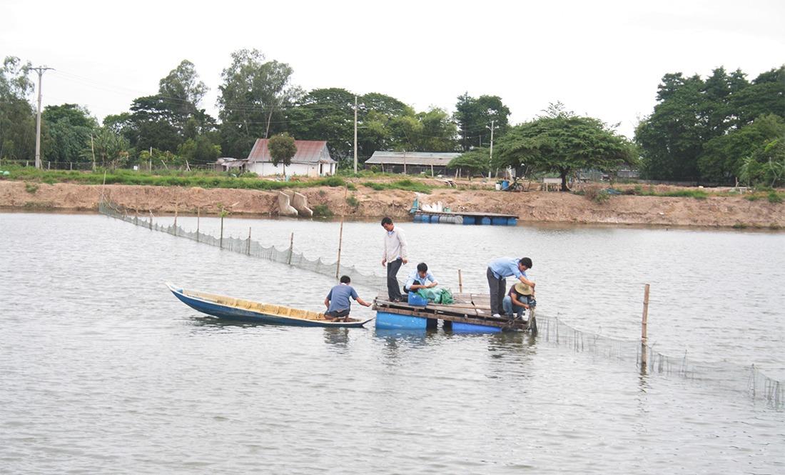 Vietnam fish farm